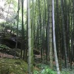 【ミシュラン・グリーンガイド三ツ星】鎌倉の報国寺・竹の庭